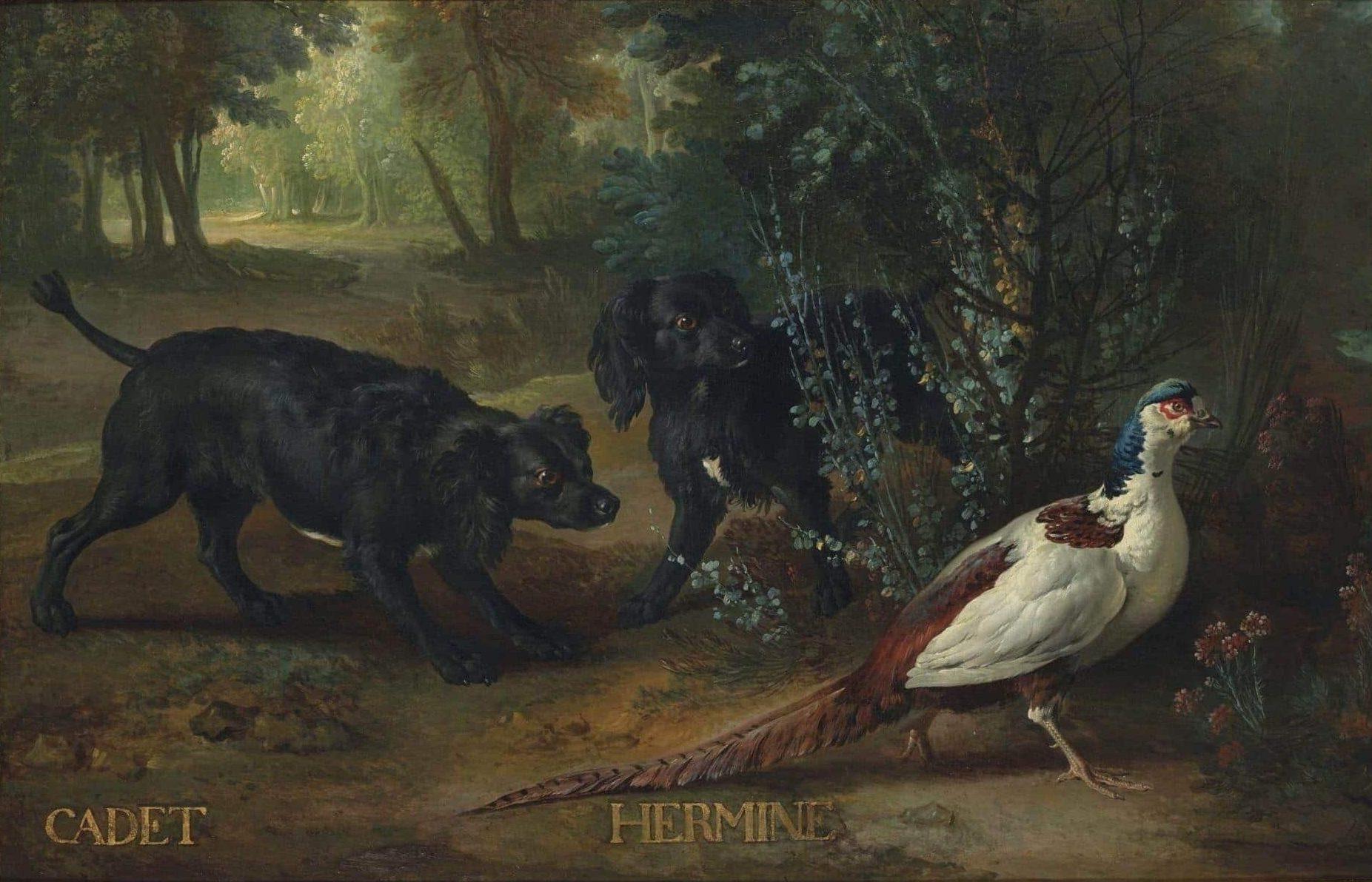 Exposition Cave Canem ! Jean-Baptiste Oudry et les chiens de Louis XV - Cadet et Hermine, acquisition