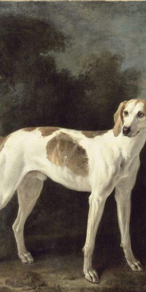 Exposition Cave Canem ! Jean-Baptiste Oudry et les chiens de Louix XV. Polydore